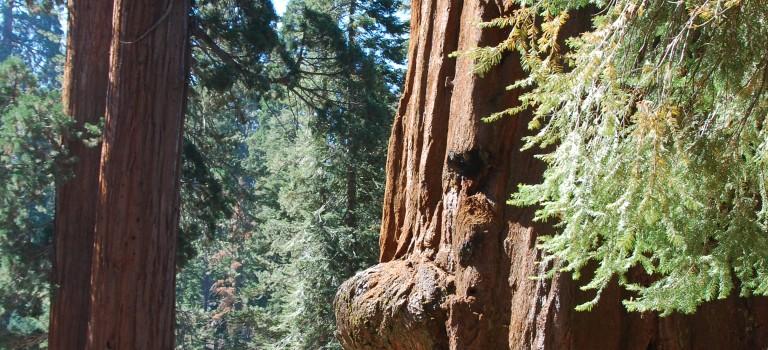 Séquoia National Park