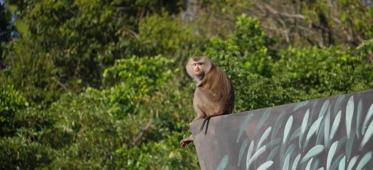 Safari à Khao Yai