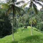 Indonésie 2016
