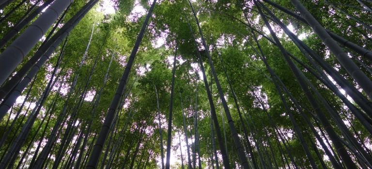 Journée bien remplie à Kamakura