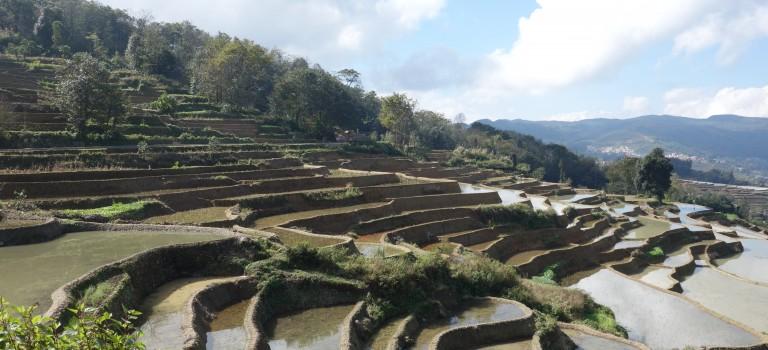 Les rizieres de Yuanyang